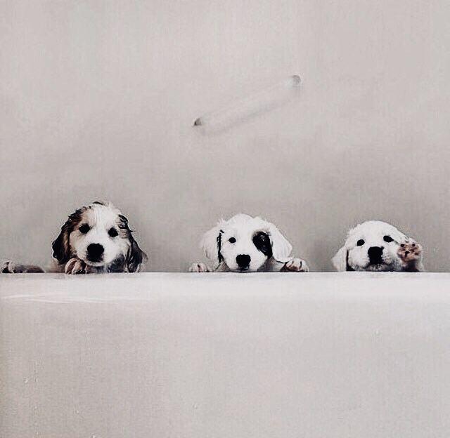 Suche Hund - Suche Hund