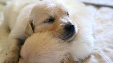 Suche Hunde Bilder 390x220 - Suche Hunde Bilder