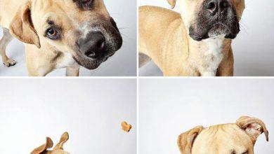 Suche Hunde Bilder Für Facebook 390x220 - Suche Hunde Bilder Für Facebook
