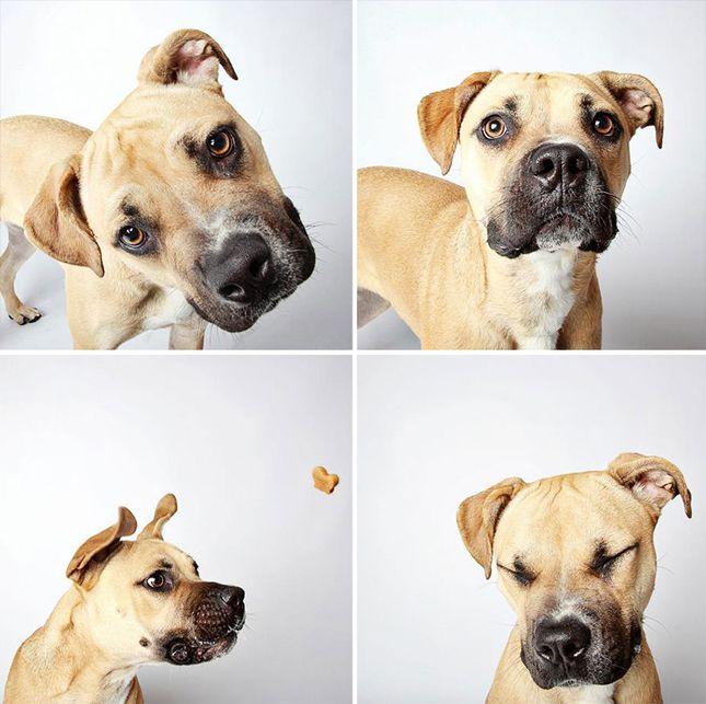 Suche Hunde Bilder Für Facebook - Suche Hunde Bilder Für Facebook