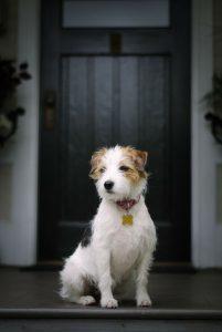 Suche Hunde Bilder Für Whatsapp 201x300 - Suche Hunde Bilder Für Whatsapp