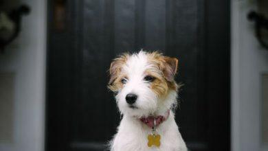 Suche Hunde Bilder Für Whatsapp 390x220 - Suche Hunde Bilder Für Whatsapp