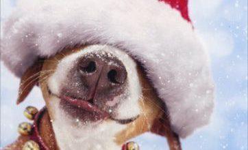 Suche Hunde Bilder Kostenlos Herunterladen 362x220 - Suche Hunde Bilder Kostenlos Herunterladen