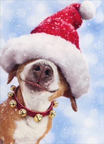 Suche Hunde Bilder Kostenlos Herunterladen - Suche Hunde Bilder Kostenlos Herunterladen