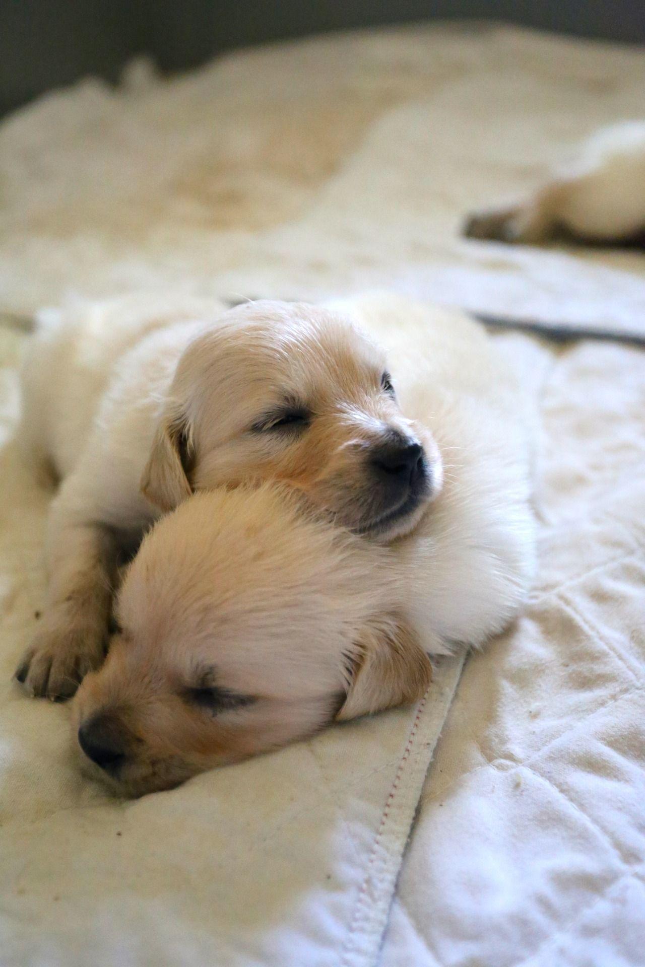 Suche Hunde Bilder - Suche Hunde Bilder