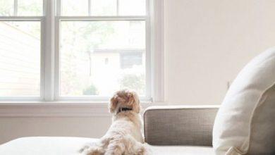 Suche Kleine Hunderassen 390x220 - Suche Kleine Hunderassen