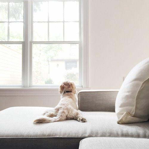 Suche Kleine Hunderassen - Suche Kleine Hunderassen