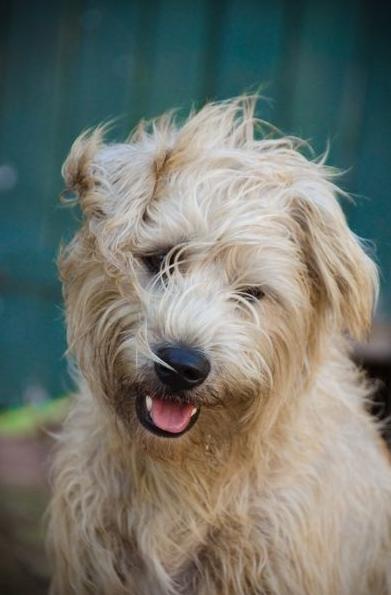 Terrier Bilder Hunderassen Für Whatsapp - Terrier Bilder Hunderassen Für Whatsapp