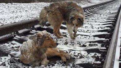 Terrier Bilder Hunderassen Kostenlos Herunterladen 390x220 - Terrier Bilder Hunderassen Kostenlos Herunterladen