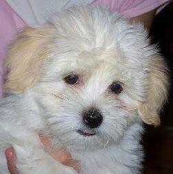 Terrier Bilder Hunderassen Kostenlos - Terrier Bilder Hunderassen Kostenlos