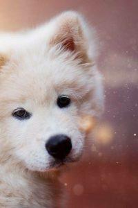 Terrier Rassen Übersicht 200x300 - Terrier Rassen Übersicht