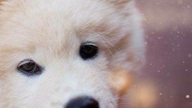 Terrier Rassen Übersicht 390x220 - Terrier Rassen Übersicht