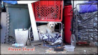 Tierbilder Hunde 390x220 - Tierbilder Hunde