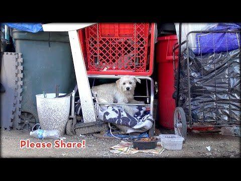 Tierbilder Hunde - Tierbilder Hunde