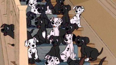 Tierrassen Hunde 390x220 - Tierrassen Hunde