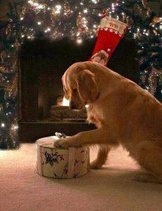 Trauerbilder Hund Für Facebook 230x300 - Trauerbilder Hund Für Facebook