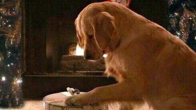 Trauerbilder Hund Für Facebook 390x220 - Trauerbilder Hund Für Facebook