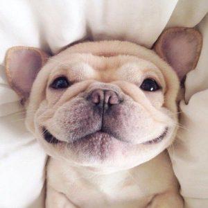 Trauerbilder Hund Kostenlos Herunterladen 300x300 - Trauerbilder Hund Kostenlos Herunterladen