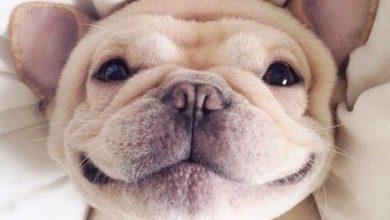 Trauerbilder Hund Kostenlos Herunterladen 390x220 - Trauerbilder Hund Kostenlos Herunterladen