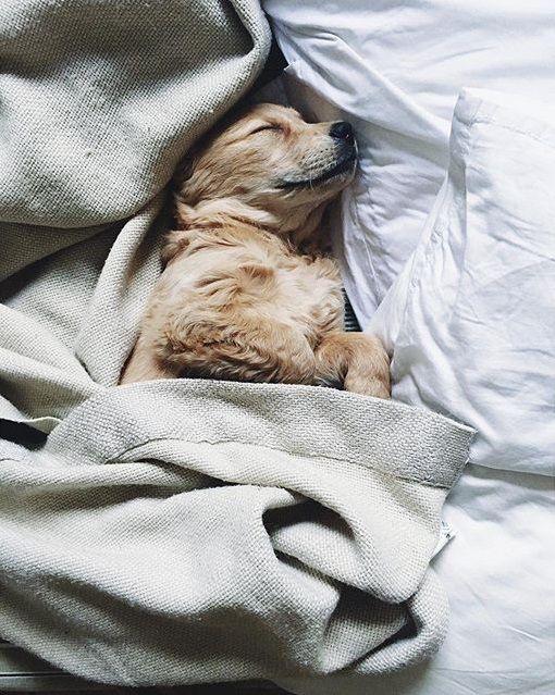 Trauerbilder Hund - Trauerbilder Hund