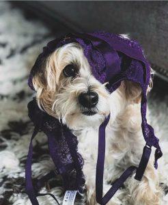 Urlaub Mit Hund 246x300 - Urlaub Mit Hund