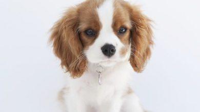 Verschiedene Hunderassen Bilder Für Whatsapp 390x220 - Verschiedene Hunderassen Bilder Für Whatsapp