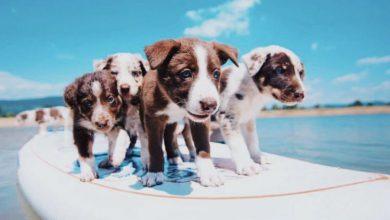 Verschiedene Hunderassen Mit Bild 390x220 - Verschiedene Hunderassen Mit Bild
