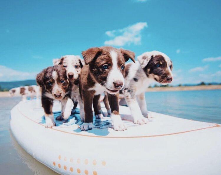 Verschiedene Hunderassen Mit Bild - Verschiedene Hunderassen Mit Bild