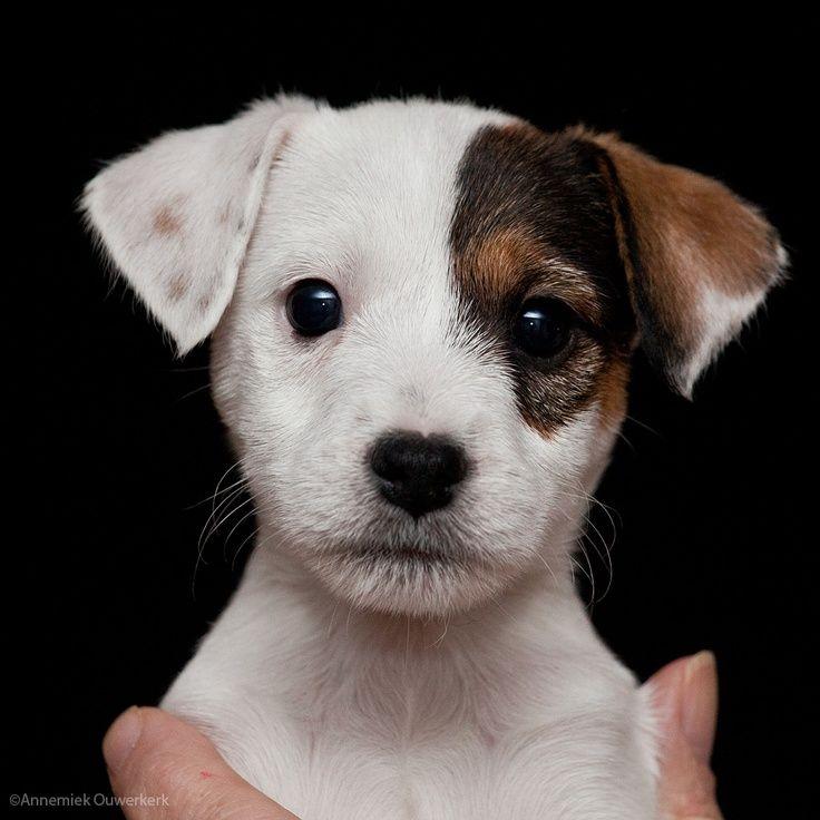 Verschiedene Hunderassen - Verschiedene Hunderassen
