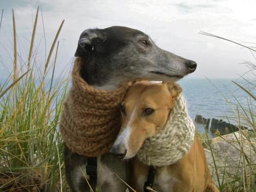 Verschiedene Kleine Hunderassen - Verschiedene Kleine Hunderassen