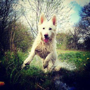 Was Für Hunderassen Gibt Es 300x300 - Was Für Hunderassen Gibt Es