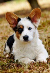 Was Gibt Es Für Hunderassen 205x300 - Was Gibt Es Für Hunderassen