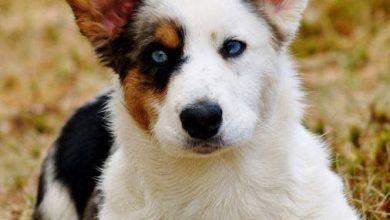 Was Gibt Es Für Hunderassen 390x220 - Was Gibt Es Für Hunderassen