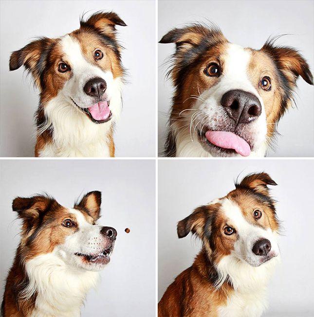 Was Gibt Es Für Hunderassen Mit Bild - Was Gibt Es Für Hunderassen Mit Bild