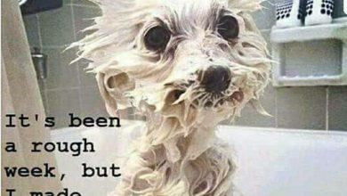 Was Gibt Es Für Kleine Hunderassen 390x220 - Was Gibt Es Für Kleine Hunderassen