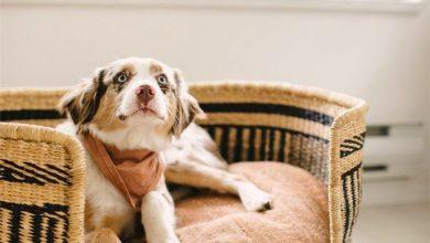 Weiß Brauner Hund 390x220 - Weiß Brauner Hund