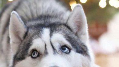 Weißer Langhaariger Hund 390x220 - Weißer Langhaariger Hund
