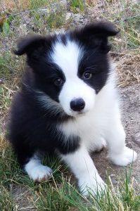 Weihnachten Hunde Bilder Für Facebook 199x300 - Weihnachten Hunde Bilder Für Facebook