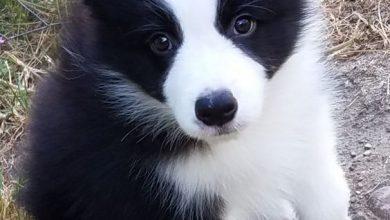 Weihnachten Hunde Bilder Für Facebook 390x220 - Weihnachten Hunde Bilder Für Facebook