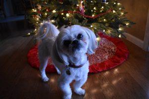 Weihnachtsbilder Hunde Für Facebook 300x200 - Weihnachtsbilder Hunde Für Facebook