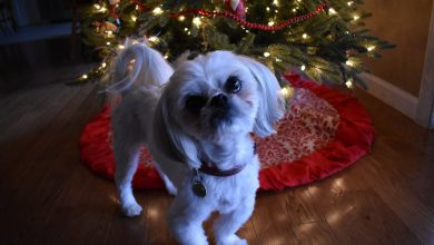 Weihnachtsbilder Hunde Für Facebook 390x220 - Weihnachtsbilder Hunde Für Facebook
