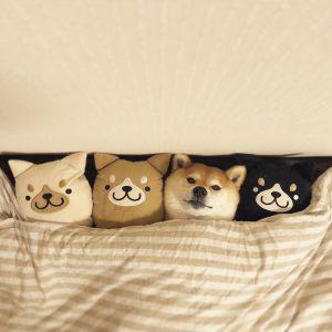 Weihnachtsbilder Hunde Kostenlos 300x300 - Weihnachtsbilder Hunde Kostenlos