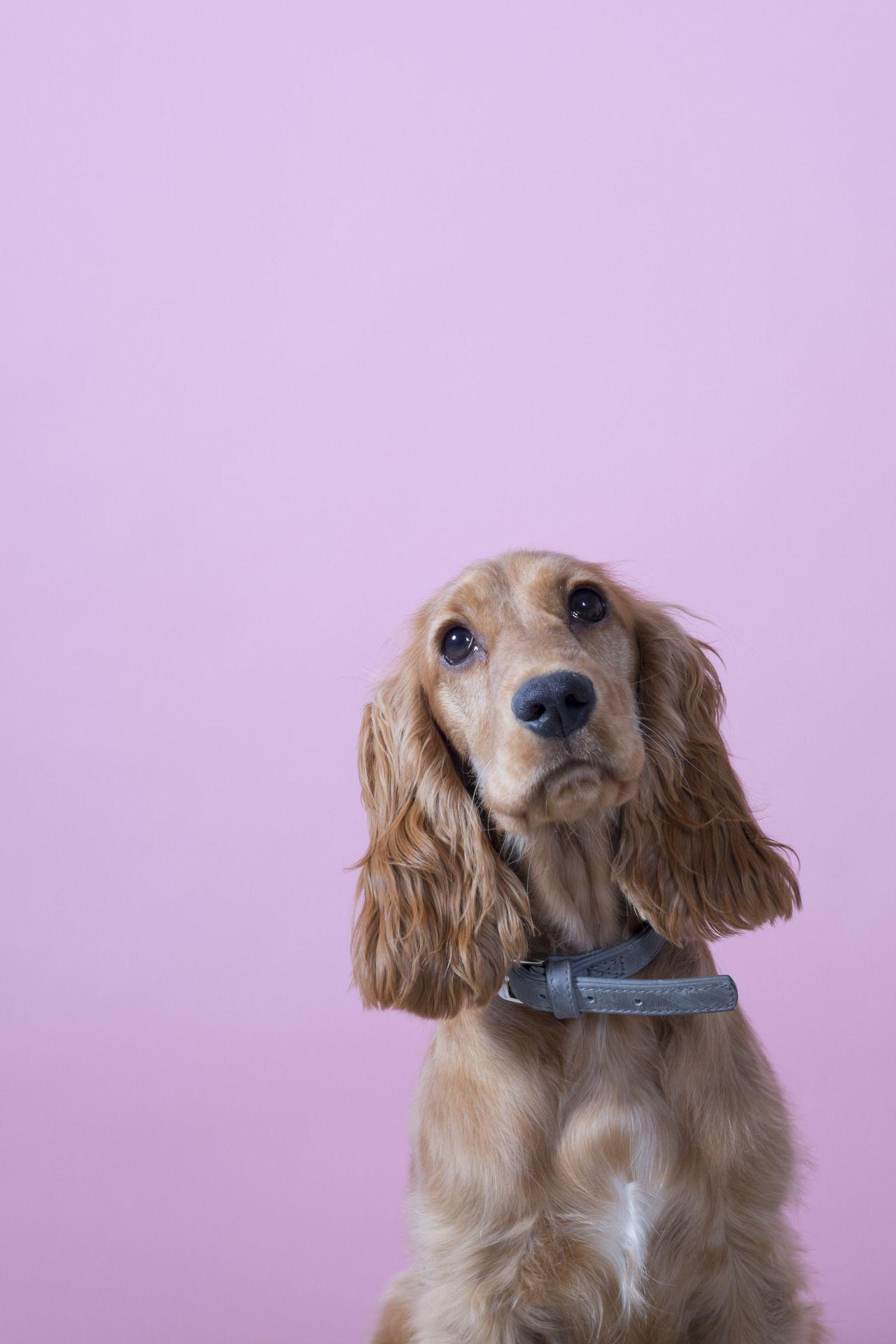 Weihnachtsbilder Hunde - Weihnachtsbilder Hunde