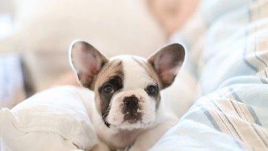 Weisse Kleine Hunderasse 390x220 - Weisse Kleine Hunderasse