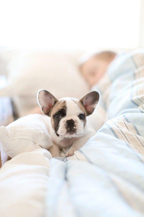 Weisse Kleine Hunderasse - Weisse Kleine Hunderasse
