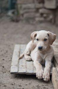 Welche Hunderassen Gibt Es Alles 195x300 - Welche Hunderassen Gibt Es Alles