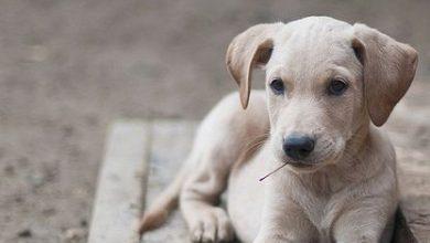 Welche Hunderassen Gibt Es Alles 390x220 - Welche Hunderassen Gibt Es Alles