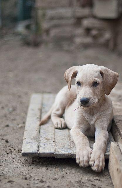 Welche Hunderassen Gibt Es Alles - Welche Hunderassen Gibt Es Alles
