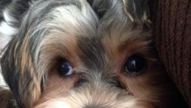 Wie Viele Hunderassen Gibt Es Auf Der Welt 390x220 - Wie Viele Hunderassen Gibt Es Auf Der Welt