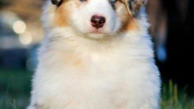 Wie Viele Hunderassen Gibt Es Und Wie Heißen Sie 390x220 - Wie Viele Hunderassen Gibt Es Und Wie Heißen Sie